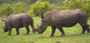 Birdies for Rhinos: On safari with Tony Johnstone